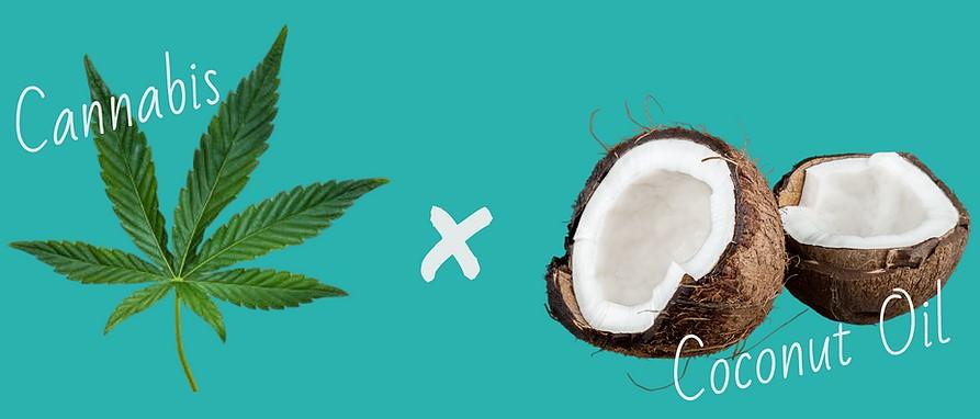 Marijuana infused coconut oil